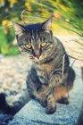 Chat assis sur rocher — Photo de stock