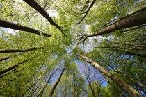 Vue de dessous vert forêt — Photo de stock