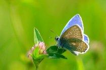 Bunte Schmetterling-Ansicht — Stockfoto