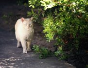 Cat in shadow of tree — Stock Photo