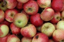 Vista de primer plano de las manzanas maduras - foto de stock