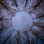 Bottom view of round wire dome construction in forest, Freiburg Im Breisgau, Germany — Stock Photo