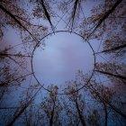 Вид снизу строительства купола круглой проволоки в лесу, Фрайбург-им-Брайсгау, Германия — стоковое фото
