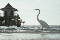 Side view of white heron on seashore, man fishing on background — Stock Photo