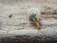 Caracol devagar rastejando ao ar livre — Fotografia de Stock