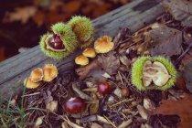 Выращивание грибов, макро — стоковое фото
