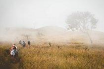 Prado otoño de viajero personas con hierba amarilla - foto de stock