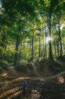 Natural forest landscape — Stock Photo