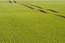 Landschaft mit landwirtschaftlichen Getreidefelder — Stockfoto