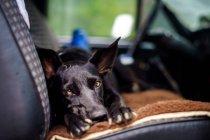 Ansicht des Hundes auf der Auto Vordersitz Suche unter Ausschluss der Öffentlichkeit — Stockfoto