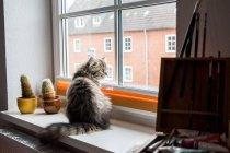 Кошка сидит на подоконнике — стоковое фото