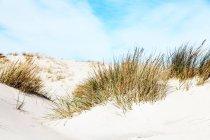 Paisagem com grama na colina de areia do deserto, close-up — Fotografia de Stock