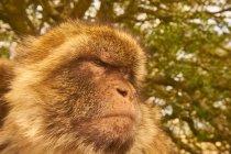 Porträt der Affe sitzt auf Baum — Stockfoto