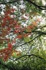 Arbres de parc d'été avec des feuilles vertes et rouges sur les branches — Photo de stock