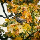 Close up view of bird perching on tree branch — Stock Photo