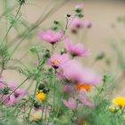Красочные цветущие цветы — стоковое фото