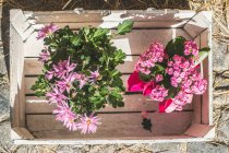 Top view of flowers in wooden crate — Stock Photo