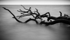 Hölzerne Haken im Meerwasser — Stockfoto