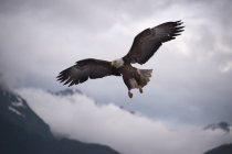 Eagle flying over mountains tops, bottom view — Stock Photo