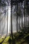Raggio di sole attraverso gli alberi di illuminazione — Foto stock