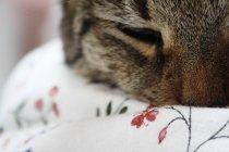 Gato dormindo no lençol floral — Fotografia de Stock