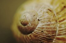 Spiral on snail shell — Stock Photo