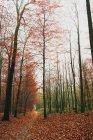Salvaje bosque en otoño - foto de stock
