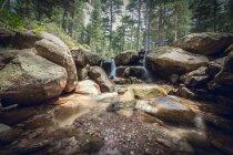 Cascata piccola foresta — Foto stock
