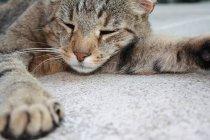 Closeup recadrée vue de fourrure chat dort sur le plancher — Photo de stock