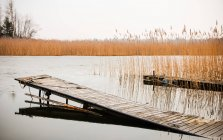 Wooden pier at the lakeside with reed — Stock Photo