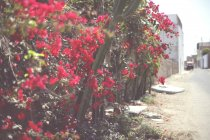 Outdoor scene with cactus — Stock Photo