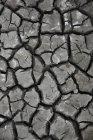 Изменение климата, трещины серых земле пустыни — стоковое фото