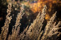 Wild herbal plants growing outdoors — Stock Photo