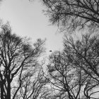 Bosque en el tiempo del otoño - foto de stock