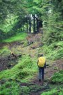 Видом на ліс та мандрівного з рюкзака — стокове фото