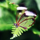 Nahaufnahme der Schmetterling auf Blatt — Stockfoto