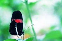 Papillon avec ailes colorées — Photo de stock