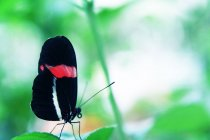 Бабочка с красочными крыльями — стоковое фото