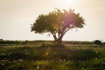 Dandelion flowers and tree — Stock Photo