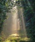Освещение солнцем сквозь деревья — стоковое фото