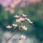 Flores del jardín florecientes - foto de stock