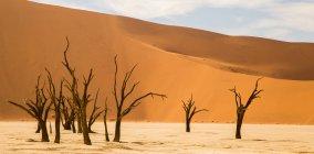Paisaje con árboles secos y terreno de postre - foto de stock