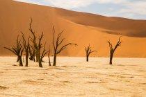 Мальовничий вид на мертві дерева у диких жаркій пустелі — стокове фото