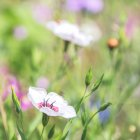 Wild flowers on green meadow — Stock Photo