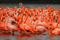 Flamingos standing in the lake — Stock Photo
