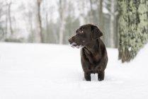 Зоомагазини, зоотовари, собака дивиться в бік — стокове фото