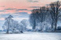 Wild winterwald — Stockfoto