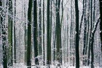 Краєвид з видом на зимовий ліс — стокове фото