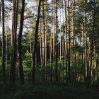 Paesaggio con vista sulla foresta — Foto stock