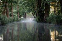 Natürliche Waldlandschaft — Stockfoto